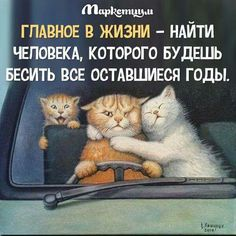 🤣🤣🤣🤣🤣🦊🐈 Sarcastic Quotes, Funny Quotes, Words For Girlfriend, Funny Cats, Funny Animals, Russian Humor, Russian Quotes, Happy Quotes Inspirational, Funny Cat Compilation
