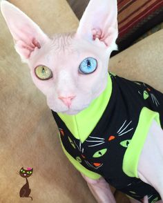 125 Best Sphynx Cat Holiday Clothes images in 2018 | Sphynx