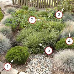 More No-Fuss, Neat and Tidy Plants This rain garden is all about looking fine with little care. There are no flowers to clip or spent perennials to cut back, yet the garden still looks interesting because of the subtle color and texture variations. Twig Dogwood, Flower Garden, Garden Design, Lawn And Garden, Gorgeous Gardens, Front Yard, Flowers, Rain Garden, Red Twig Dogwood