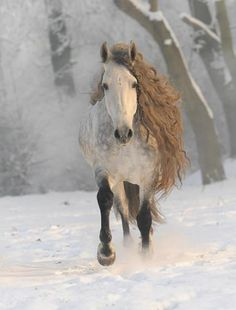 Beautiful strong Horse