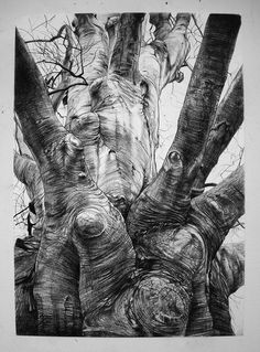 how to draw an elephant woolfenden tree trees in 2018 draw 6798