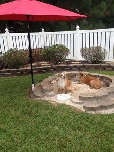 dog friendly backyard ideas backyard ideas for dogs best dog friendly backyard ideas on dog yard dog friendly backyard design ideas for dogs Dog Friendly Backyard, Dog Backyard, Backyard Projects, Backyard Landscaping, Landscaping Ideas, Dog Playground, Playground Ideas, Playground Design, Backyard Playground