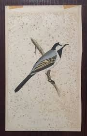 Image result for bird wagtail tattoo inspiration