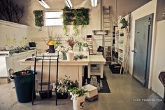 Isari Flower Studio, Solana Beach. Plants on high walls