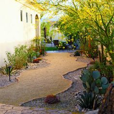 A half-inch of decomposed granite over a compacted base forms a firm clean surface that drains well when summer rains drench this garden in Rancho Mirage, CA.  The path's irregular shape, edged with pale flagstone, encourages visitors to slow down and enjoy the yellow-flowering palo verde agaves and opuntia and barrel cactus along the way.