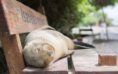 Die Robbe auf der Parkbank