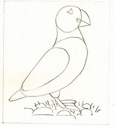 Lizzie Harper natural science illustration step by step of Puffin illustration