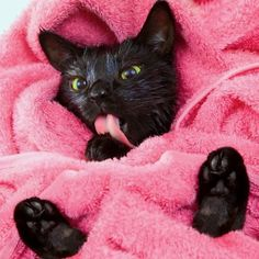 All clean and like OMG! get some yourself some pawtastic adorable cat apparel!