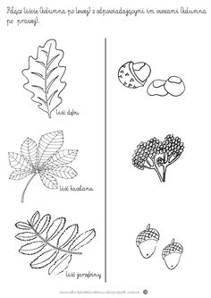 Leaf Coloring Page, Coloring Pages, Autumn Activities For Kids, Learning Activities, Fall Crafts, Diy And Crafts, Polish Language, Educational Crafts, Outdoor Classroom