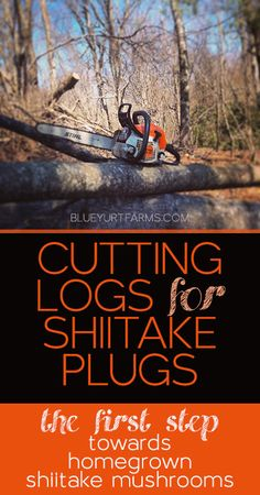 Cutting Logs - The First Step Towards Homegrown Shiitake Mushrooms! Tips on finding the right wood, and ordering your own shiitake plugs! Garden Mushrooms, Wild Mushrooms, Stuffed Mushrooms, Grow Your Own Mushrooms, Growing Mushrooms, Farm Gardens, Outdoor Gardens, Organic Gardening, Gardening Tips