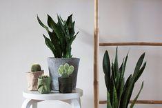 de Zaktus | inspiration | home Planter Pots, Green