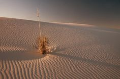 Sand Dune At Dawn - Photograph at BetterPhoto.com White Sands National Monument, Dune, Photograph, Plants, Photography, Photographs, Plant, Planets, Fotografia