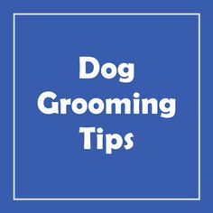 Dog grooming is super important, epecially for wrinkle dog breeds like English bulldogs, French bulldogs and Pugs. We have loads of dog grooming tips including dog wrinkle cleaning, dog wrinkle care and protection, tail pocket cleaning and tear stain removal for those stubborn dog eye stains as well as other long haired dog grooming tips. English Bulldogs, French Bulldogs, Tear Stain Removal, Wrinkle Dogs, Dog Grooming Tips, Dog Cleaning, Face Wrinkles, Tear Stains, Dog Eyes