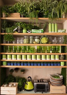 Cozinha verde, prateleiras de madeira com xícaras verde e branca da pantone, copos de vidro verde e muitas plantas. Casa Airbnb Greenery  A parceria entre Pantone e Airbnb