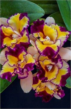 Shade Garden Flowers And Decor Ideas Orchids Unusual Flowers, Rare Flowers, Flowers Nature, Tropical Flowers, Amazing Flowers, Colorful Flowers, Beautiful Flowers, Orquideas Cymbidium, Calla