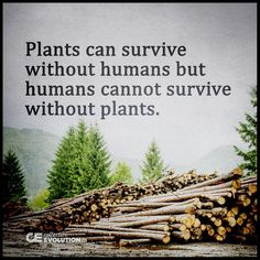 Top Life Quotes Or Principles School Did Not Teach You Save Nature Quotes, Life Quotes Love, Wisdom Quotes, Quotes About Nature, Qoutes, Quotations, Save Planet Earth, Save Our Earth, Love The Earth