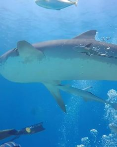 Shark Facts, Ocean Video, Weird Fish, Fishing Videos, Tropical Beaches, Sea Fish, Beautiful Places To Travel, Travel Activities, Marine Life