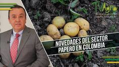 Novedades del Sector Papero en Colombia - Cultivo de Papa - TvAgro por J...