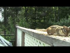 ▶ Birds and chipmunks