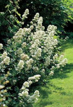 Planting, Gardening, Flora, Plants, Lawn And Garden, Horticulture