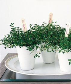"""""""It's Thyme!"""" Give these adorable individual planters as baby shower party favors! #HonestBabyShower"""