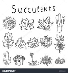 Image result for vector succulents watercolor