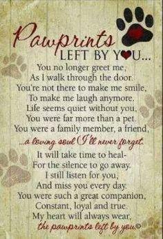 In memory of Sadie Mae 10/30/2000   3/12/2010