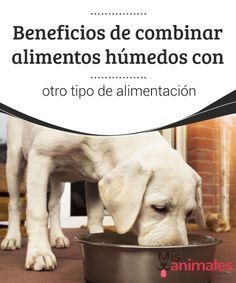 #Beneficios de combinar alimentos #húmedos con otro tipo de alimentación  La elección de la #comida de nuestro #perro no siempre es una tarea tan sencilla. No consiste en ir a la sección de comida para mascotas de un #supermercado y elegir entre alimentos húmedos o secos.