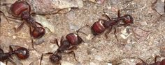 Ants Comprehend Cancer, the Internet and the Human Brain Better Than We Do
