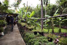 Biking in the Bangkok Jungle