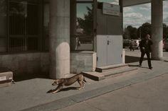 Boris Savelev, Dog, Moscow, 2007, 164 x 110 cm. Multi-layered pigment print on gesso-coated aluminium. © Boris Savelev. Courtesy Michael Hoppen Gallery