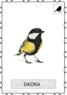 ptak12 Learning Time, Kids Learning, Bird Art, Montessori, Art For Kids, Cute Animals, Monet, Birds, Polish Language