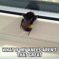 Don't worry, little guy. We think they are. #pawnation #animals #meme #animalmeme