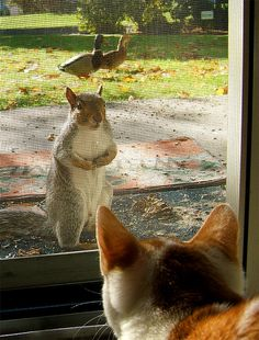 Excuse me, the ducks and I were wondering why breakfast was late this morning....