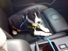 Dog afraid of car rides? Here's how to get your dog comfortable with riding in the car!