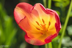 flower by Gilbert Dorléans on 500px