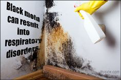 Black mold grow on damp walls, bathroom tiles, fabrics, and leather goods. Cleaning Bathroom Mold, Bathroom Mold Remover, Mold In Bathroom, Cleaning Walls, Cleaning Tips, Kill Black Mold, Remove Black Mold, How To Clean Rust, How To Remove Rust
