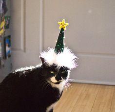 Christmas Tree Cat Hat by NotsoKittyShop on Etsy, $16.00