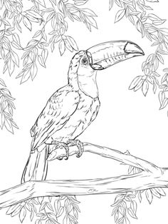 4 Easy Printable Coloring Pages Bird Toco Toucan coloring page SuperColoring Super Coloring Pages, Bird Coloring Pages, Free Printable Coloring Pages, Mandala Coloring, Adult Coloring Pages, Coloring Books, Coloring Worksheets, Free Coloring, Bird Drawings