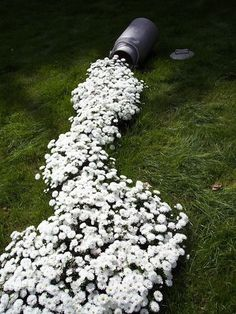 "very cool... flowers ""spilling"" out of container"