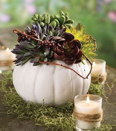 Ceramic pumpkin & succulent arrangement