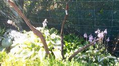 'Driftwood Form' $30 NZ Dollars Set of three driftwood garden rods Driftwood, Garden Art, Drift Wood, Yard Art