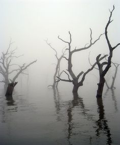 trees water lake dead old