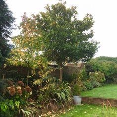 magnolia grand