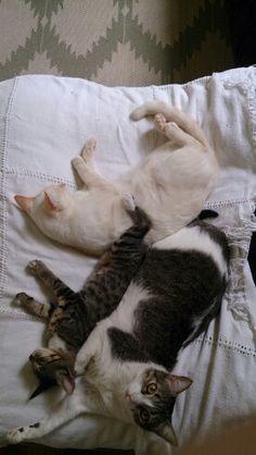 Ninho de Gato,  aqui em casa é assim
