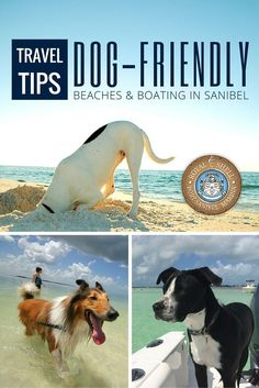 Bring your dog on vacation to Florida. Enjoy dog-friendly beaches, boating, great fishing and accommodations in paradise on Sanibel Island. #Sanibel #NationalDogDay