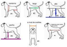Diy Dog Wheelchair, Dog Anatomy, Cruciate Ligament, Veterinary Medicine, Basset Hound, Equestrian Style, Dog Harness, Matilda, Pitbulls