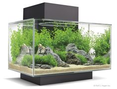 The Fluval Edge is one of the most popular and iconic nano aquariums available today. 2011 will see the launch of the redesigned Edge range with a larger size option and a new 'Day & Night' LED lighting system.