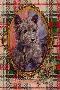 Scottish Terrier Tartan