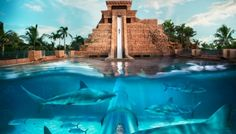 Aquaventure at Atlantis, Paradise Island | Bahamas Family Activities